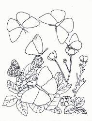 plansa de colorat animale fluturasi de colorat p46