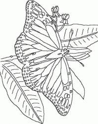 plansa de colorat animale fluturasi de colorat p50