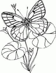plansa de colorat animale fluturasi de colorat p55