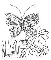 plansa de colorat animale fluturasi de colorat p64