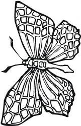 plansa de colorat animale fluturasi de colorat p66