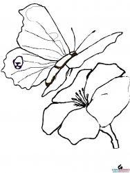 plansa de colorat animale fluturasi de colorat p74