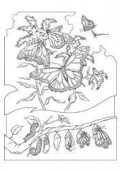 plansa de colorat animale fluturasi de colorat p76