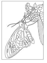plansa de colorat animale fluturasi de colorat p79