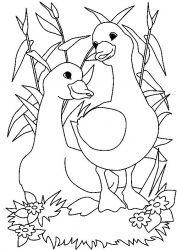 plansa de colorat animale gaste de colorat p21
