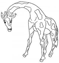 plansa de colorat animale girafe de colorat p05