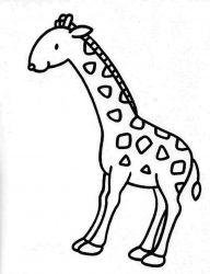 plansa de colorat animale girafe de colorat p17