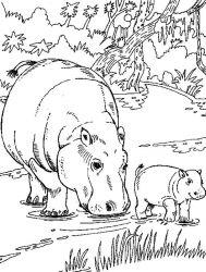 plansa de colorat animale hipopotami de colorat p02