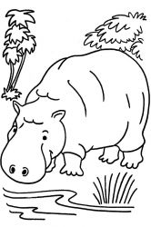 plansa de colorat animale hipopotami de colorat p08