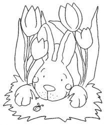 plansa de colorat animale iepurasi de colorat p06
