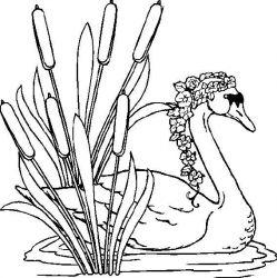 plansa de colorat animale lebede de colorat p13
