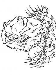 plansa de colorat animale lei de colorat p29