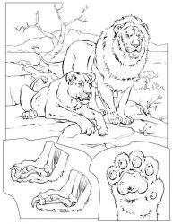 plansa de colorat animale lei de colorat p30
