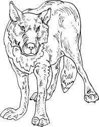 plansa de colorat animale lupi de colorat p05