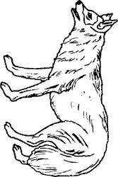 plansa de colorat animale lupi de colorat p06