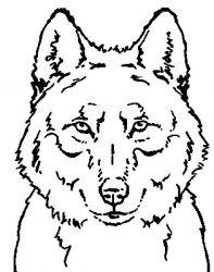 plansa de colorat animale lupi de colorat p14