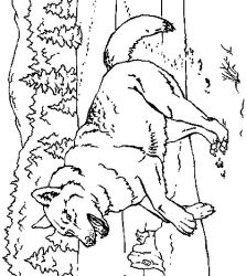 plansa de colorat animale lupi de colorat p15