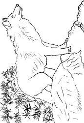 plansa de colorat animale lupi de colorat p17