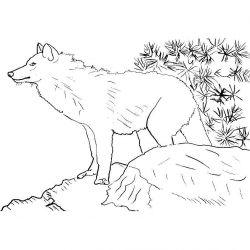 plansa de colorat animale lupi de colorat p24