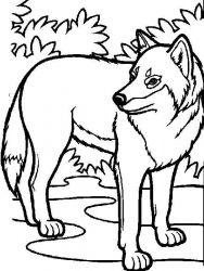 plansa de colorat animale lupi de colorat p26
