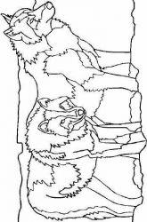 plansa de colorat animale lupi de colorat p29
