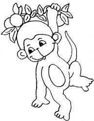 plansa de colorat animale maimute de colorat p24
