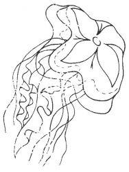 plansa de colorat animale meduze de colorat p03