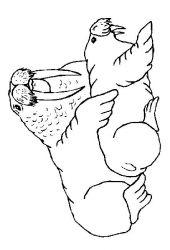 plansa de colorat animale morse si foci de colorat p01