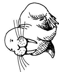 plansa de colorat animale morse si foci de colorat p03