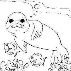 plansa de colorat animale morse si foci de colorat p10