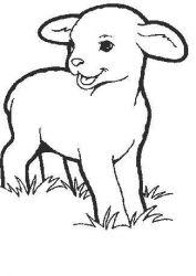 plansa de colorat animale oi de colorat p13