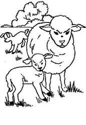 plansa de colorat animale oi de colorat p35