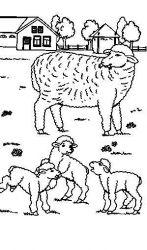 plansa de colorat animale oi de colorat p48