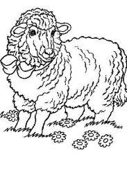 plansa de colorat animale oi de colorat p55