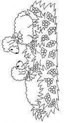 plansa de colorat animale oi de colorat p65