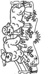 plansa de colorat animale oi de colorat p66