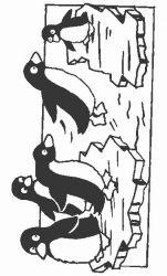 plansa de colorat animale pinguini de colorat p17
