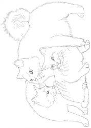 plansa de colorat animale pisici de colorat p68