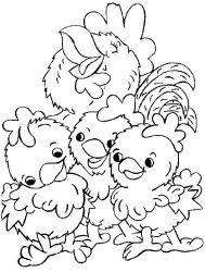 plansa de colorat animale pui de colorat p24