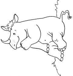 plansa de colorat animale rinoceri de colorat p12