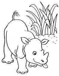 plansa de colorat animale rinoceri de colorat p15