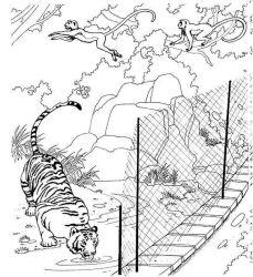 plansa de colorat animale tigri de colorat p01
