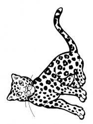 plansa de colorat animale tigri de colorat p02
