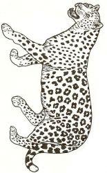 plansa de colorat animale tigri de colorat p05