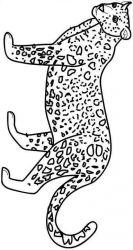 plansa de colorat animale tigri de colorat p06