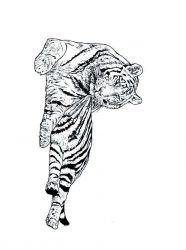 plansa de colorat animale tigri de colorat p08