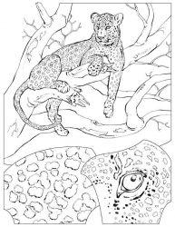 plansa de colorat animale tigri de colorat p11