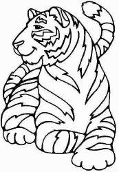 plansa de colorat animale tigri de colorat p13