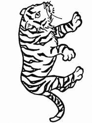 plansa de colorat animale tigri de colorat p15
