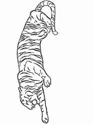 plansa de colorat animale tigri de colorat p16
